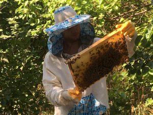 Мёд с пасеки Харьков