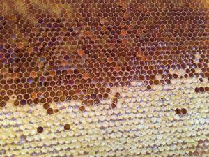 Что такое забрусовый мёд?