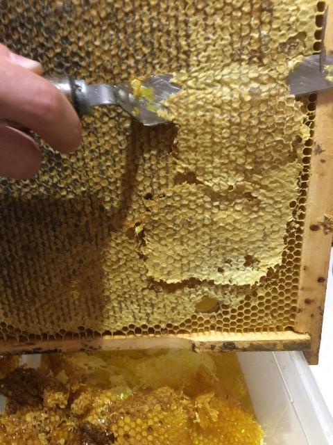 Забрусовый мёд