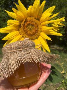Подсолнечный мед: полезные свойства и противопоказания