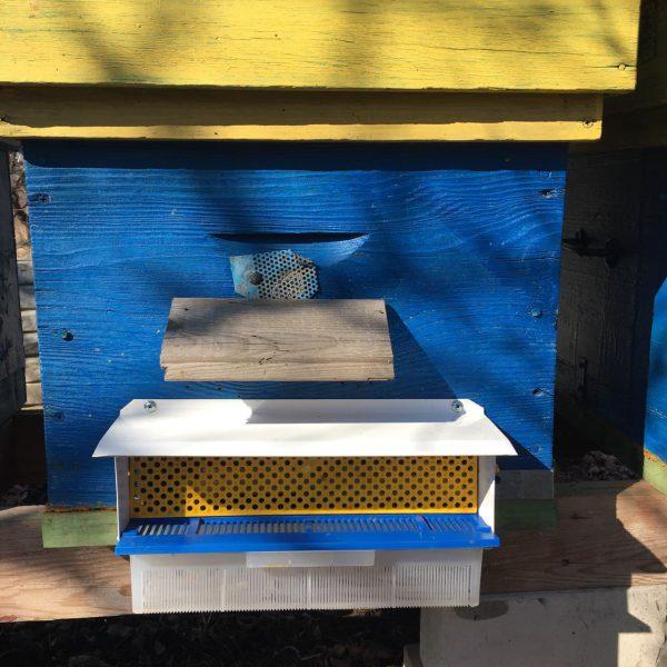 купить пчелиную пыльцу оптом