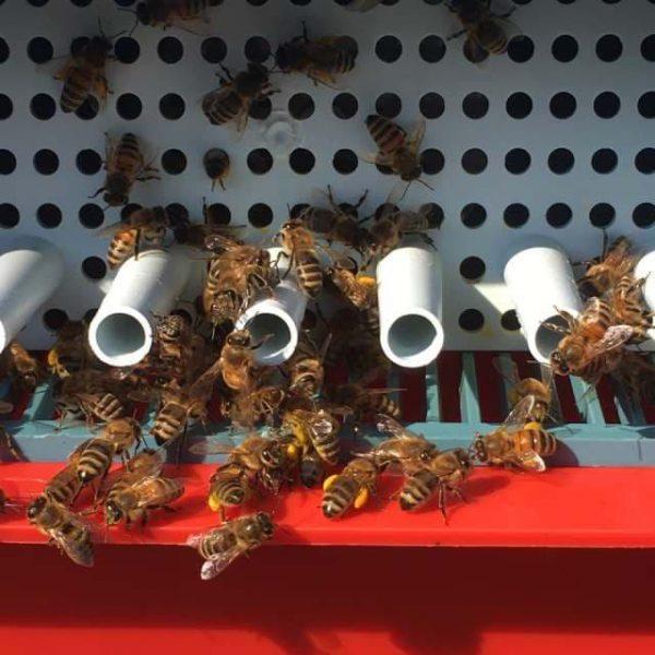 Пчелиная пыльца купить пыльцу продажа пыльцы