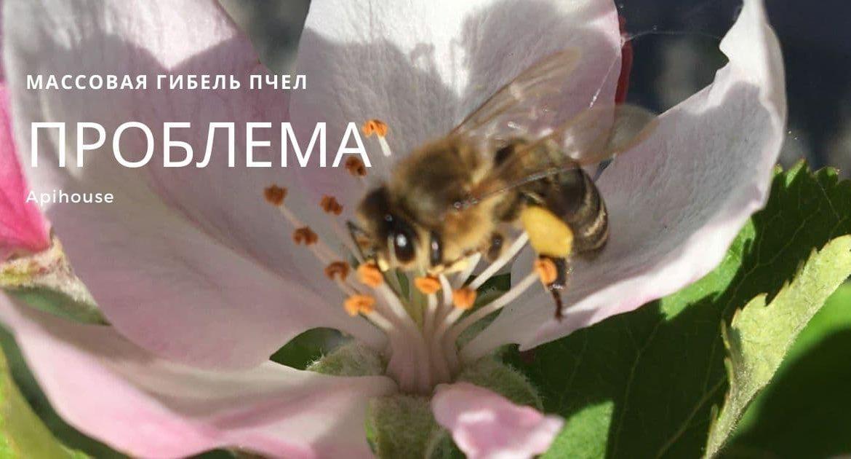 Почему массово гибнут пчелы и как каждый из нас может им помочь?